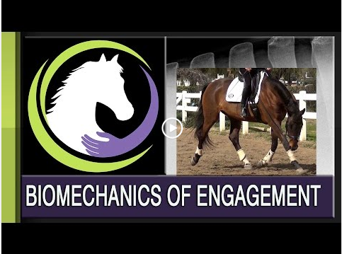 DEVELOPING YOUR HORSE'S BACK: THE BIOMECHANICS OF ENGAGEMENT