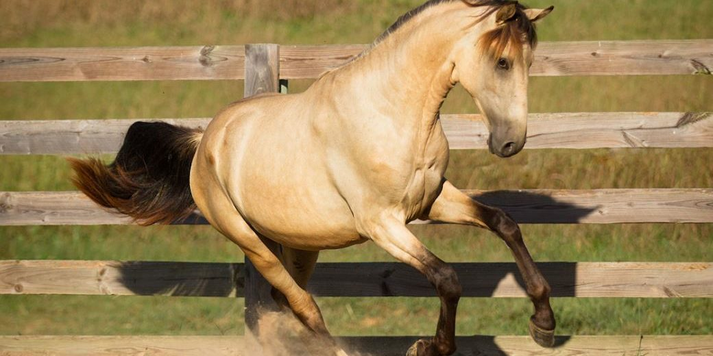 Recently published scientific research for Equine Behaviour 113 by Dr Jo Hockenhull